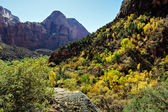 Beautiful valley Zion National Park — Stock Photo