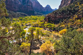 Verdant Virgin River valley — Stock Photo