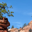 Stock Photo: Stunted Tree on Rocky Outcrop