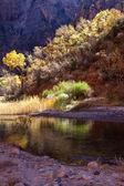 Zion National Park Utah autumn landscape virgin — Stock Photo