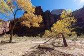Arbres rabougris à zion national park — Photo