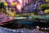 Virgin River Zion National Park — Stock Photo