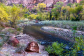 The Meandering Virgin River — Stock Photo