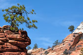Stunted Tree on a Rocky Outcrop — Stock Photo
