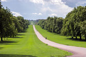 The Long Walk at Windsor Great Park — Stock Photo