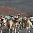Caravan of camels carrying tourists along a well trodden route — Stock Photo #39803437