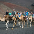 Stock Photo: Caravof camels carrying tourists along well trodden route