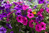 Close-up of a window box outside a property in Rusper West Susse — Stock Photo