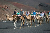Caravan of camels carrying tourists along a well trodden route — Stock Photo