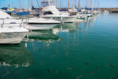 Lanzarote marina — Stock Photo