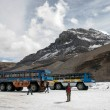 Stock Photo: Snow coaches parked on AthabascGlacier