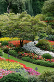 Stunning floral display at Butchart Gardens — Stock Photo