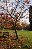 Trees in the grounds of the Ashdown Park Hotel — Foto Stock