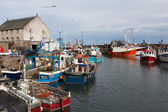 View of the harbour at Pittenweem — Stock Photo