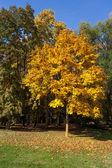 Autumn scene in the Parco di Monza Italy — Stock Photo