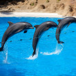 Dolphin show at Loro Parque — Stock Photo #41228525