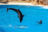 Dolphin show at Loro Parque — Stock Photo
