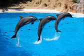 Dolphin show at Loro Parque — Stock Photo