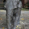 Janyelephant sculpture in Chester — Foto Stock #41490983