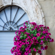 Wicker basket full of Petunias in Pienza — Stock Photo #41557059