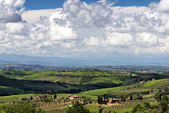 Countryside of Val d'Orcia Tuscany — Stock Photo