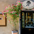Dog rose outside shop in Pienza — Stock Photo #41562521