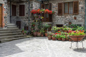 Multitude of flowers on display outside a house in Radicofani — Stock Photo