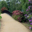 Stock Photo: Rhodendrons in Sheffield Park Gardens