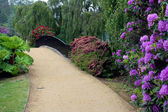 Rhodendrons in Sheffield Park Gardens — Stock Photo