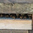 Foto de Stock  : Bees in the Hive