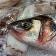 Stock Photo: EuropeSeabass (Dicentrarchus labrax) for sale