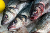 European Seabass (Dicentrarchus labrax) for sale — Stock Photo