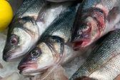 European Seabass (Dicentrarchus labrax) for sale — Stock Photo