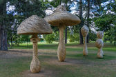 Tom Hare's Fungi Fairy Ring — Stock Photo