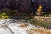 Zion national park nello utah — Foto Stock