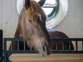 Horse in a stable on a farm near Ronda — Foto de Stock