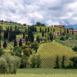 Countryside around Sant Antimo Abbey in Montalcino Tuscany — Stock Photo #50156911