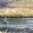 Fly fishing in Fairy Creek — Stock Photo #50240981