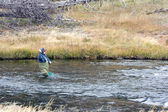 Fly fishing in Fairy Creek — Stock Photo