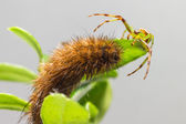 The butterfly caterpillar — Stock Photo
