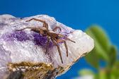Portrait of a Ground wolf-spider — Stock Photo
