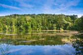 Trees reflection in water — Stock Photo