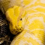 Snake — Stock Photo #47074309