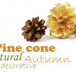Two pine cones and one golden cone — Stock Photo #37492737