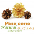 Two pine cones and one golden cone — Stock Photo #37495383