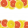 Abstract background of citrus slices. — Stock Photo #37497645