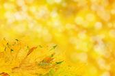 Sfondo di foglie d'autunno — Foto Stock