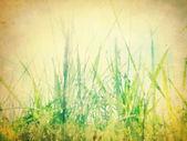 Vintage nature background — Stock Photo