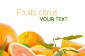 Fruits citrus — Stock Photo
