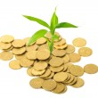 Coins and plant, isolated on white background — Stock Photo